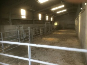 Milking Parlour Indoors
