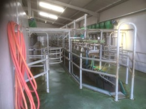 Milking Parlour Pit and Machine